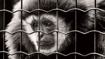 animal animal photography animal portrait black and white