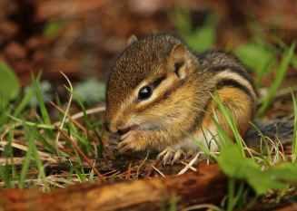 adorable animal baby backyard
