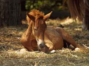 horses horse pony foal
